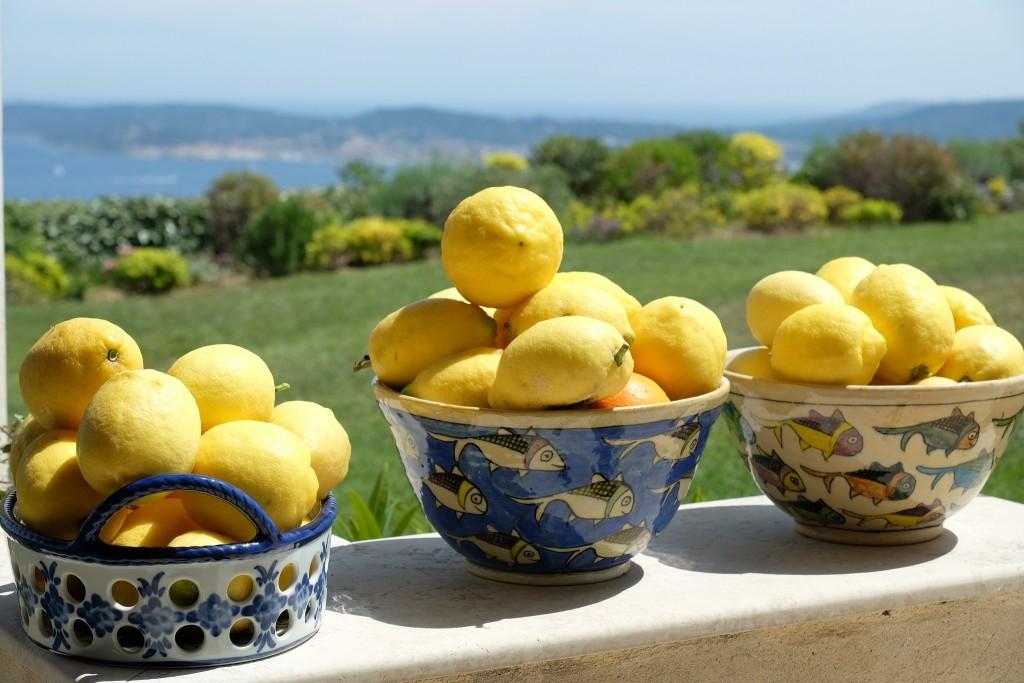 Zitronenernte, Südfrankreich, Zitronen, Lifestlye Blog Lieblingsstil, Lifestyleblog Lieblingsstil,1