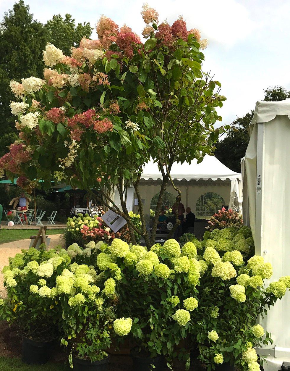 Hortensienbaum, Herbstpartie Gut Barbarastein, Lifestyle-Blog, Lieblingsstil.com
